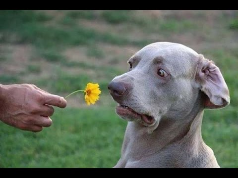 TRY NOT TO LAUGH – Funny dog compilation