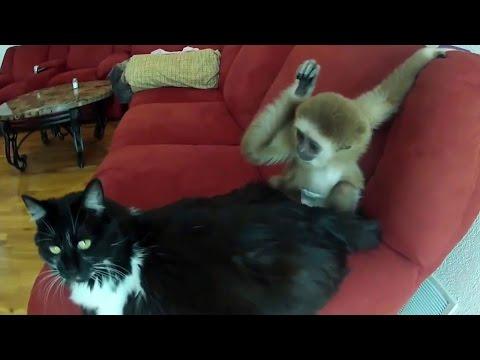Monkey Vs Cat Funny Video – Monkey Vs Cats (Wild Animals TV®)