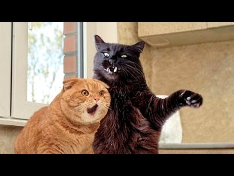 Cats, funniest creatures in animal kingdom – Funny cat compilation