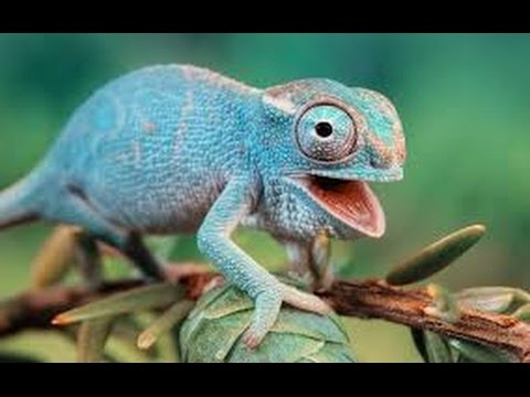 Funny Animals Compilation 2016 | Best Funny Animal Fails and Cute – Try Not To Laugh