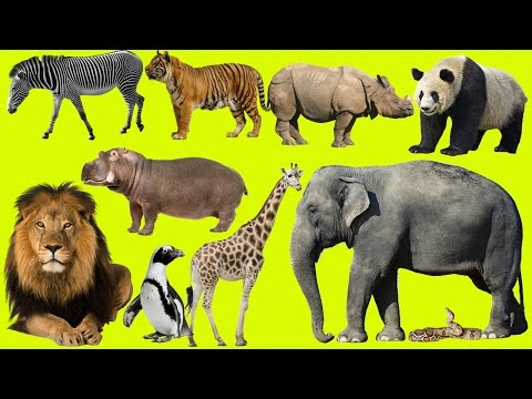 Kids at the Zoo | Animals at the Zoo | Learn Safari Wild ZOO Animals Names – Handplaytv Learn