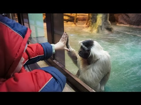 Funny Monkeys At The Zoo / Part 7