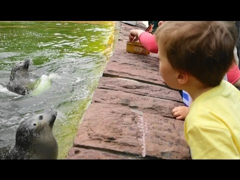 Funny Animals Just for Kids Babies and Toddlers  ZOO