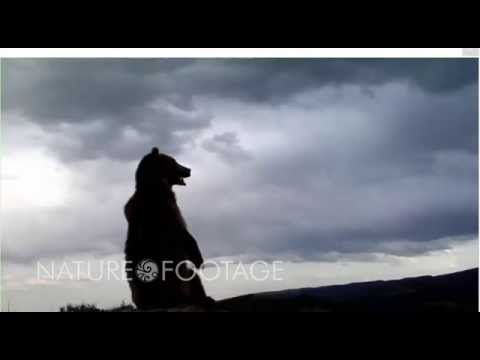 Funny Wild Animals Video part 3