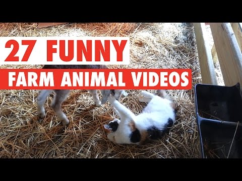 27 Funny Farm Animal Videos Compilation 2016