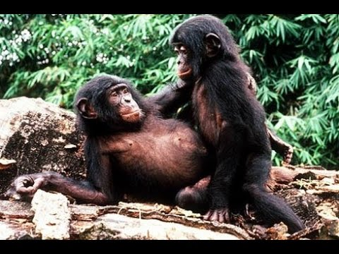 Powerful Wild Animal Mating | Funny Smart Animals | Amazing Animals Video 2016