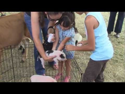 Funny Animals at Petting Zoo