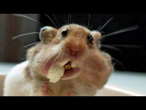 TRY TO HOLD YOUR LAUGH CHALLENGE – Super funny ANIMAL videos!