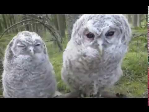 Funny Wild Animals Video