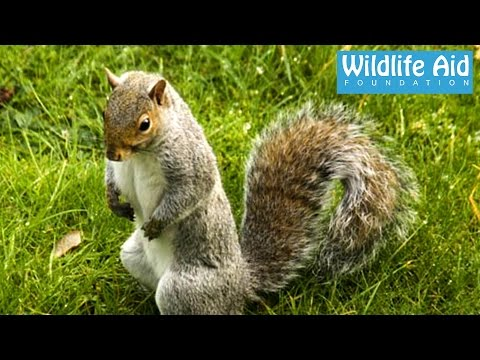 Squirrel terrorizes old lady… Funny Animal Rescue