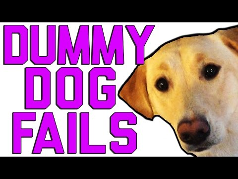 "Dummy Dogs || ""Dog Fails"" By FailArmy"
