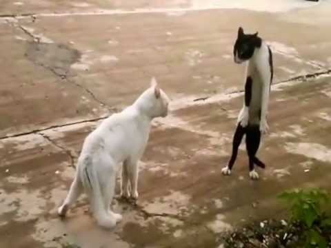 Fail compilation vol.2 – Funny and crazy animals