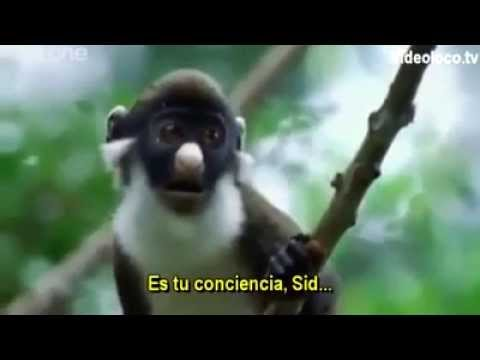 BBC Funny Talking Animals – Walk On The Wild Side (Subtitulado al español)