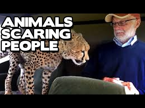 Animals Scaring People Compilation! (BEST FUNNY ANIMAL COMPILATION)