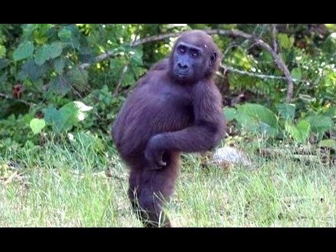 Funny Animals And Cute Animal Videos Compilation 2016