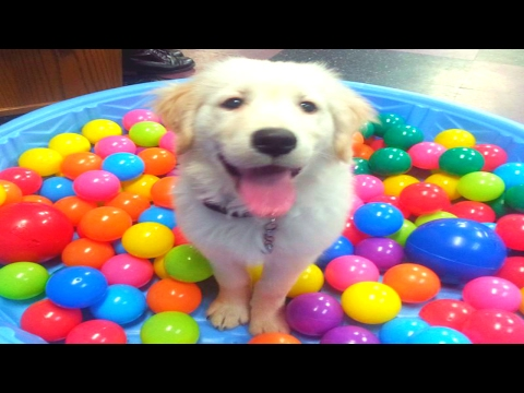FUNNY DOG VIDEOS 4