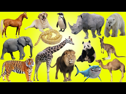Kids at the Zoo and Circus | Funny Animals for Kids | Learn Animals for Children