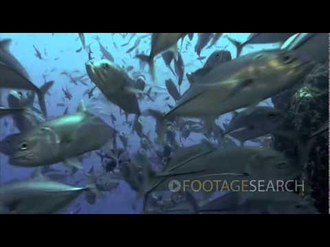 Funny Wild Animals Video part 4