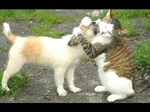 Funny Cats Meeting Cute Puppies Compilation || NEW