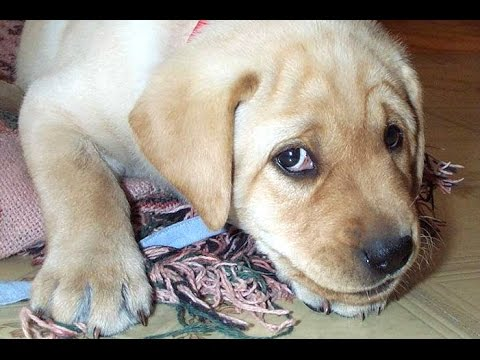 Guilty Dog Videos – A Funny Guilty Dogs Compilation 2015