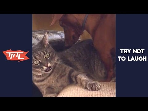 TRY NOT TO LAUGH or GRIN – Funny Cats & Dog Vines