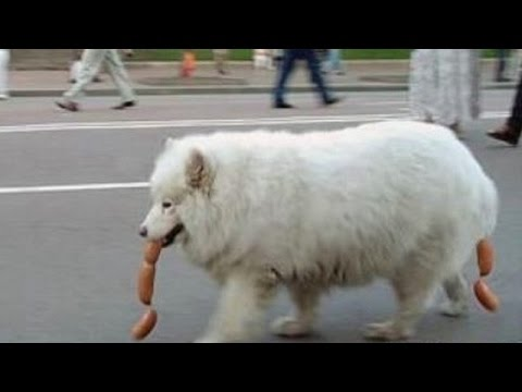 TOP Funny. A Funny Dog Videos – FUNNY VIDEO
