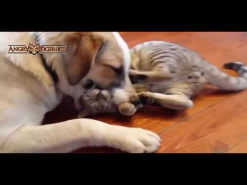 Funny Cats A Funny Cat Videos Compilation