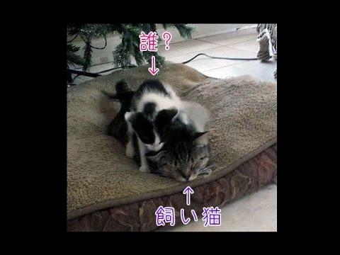 猫が子猫を連れて帰ってきた!Funny cats♡
