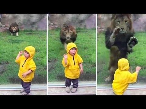 Zoo Animals vs Kids! | Video Digest