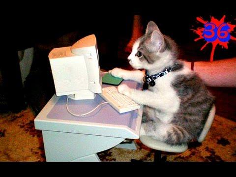 ПРИКОЛЫ С КОТАМИ BEST FUNNY CATS VIDEOS COMPILATION