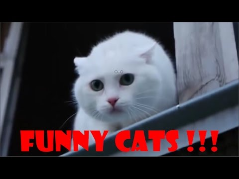Lustige katzen videos zum totlachen 2017 – Funny Cats