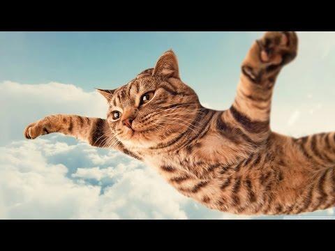 Śmieszne koty #9 ? Funny cats & fails | Spróbuj się nie zaśmiać | Kompilacja 2017