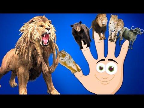 Animals Finger Family | Wild Animals Finger Family | Funny Animals Family Rhyme | Toonz