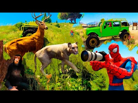 Learn Wild ANIMALS Sounds With SPIDERMAN and HULK. Funny Hunting Cartoon For Kids And Children.