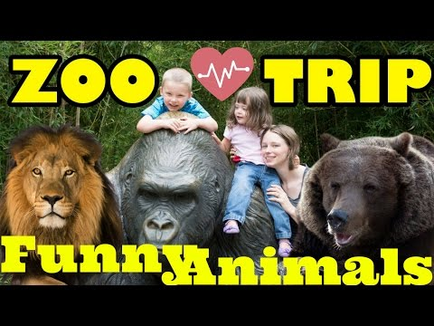 Kids At The Zoo | New Funny Animals Compilation | Funny Zoo Trip | Funny Videos 2017