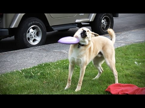 Funny DOG FAILS [Fun with Animals]