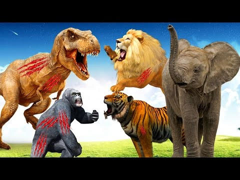 Most Amazing Wild Animals Attacks   learn wild animals names Animal Sounds funny animals compilation