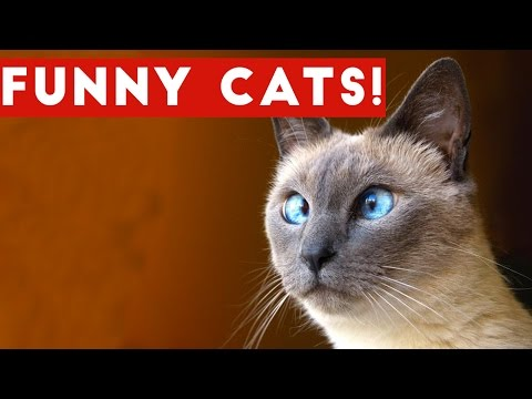 Funny Cats Compilation 2017 | Best Funny Cat Videos Ever