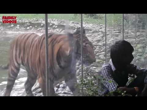 Zoo Animals Attacks? Funny Wild Animals Attacks [Family Videos]