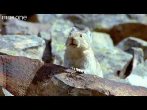 Funny Talking Animals – Walk On The Wild Side – Episode One Preview – BBC One