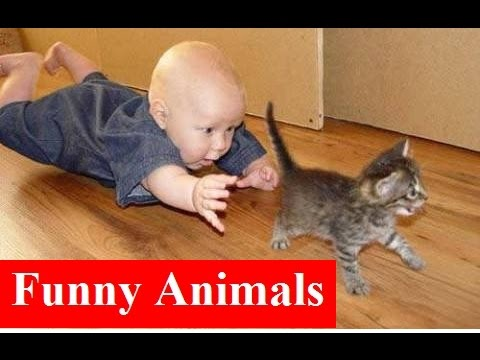 Funny Videos * Funny Cats & Kids * Best Funny Vines Compilation