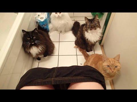 Постарайся не рассмеяться – Самые Смешные Коты 2017 #9   FUNNY CATS and ANIMALS [FUNNY TREND]