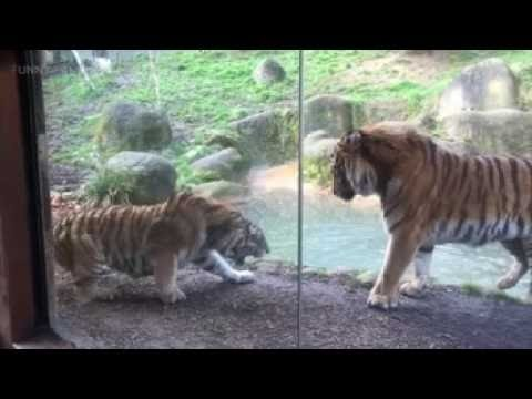 Zoo Animals Attack Compilation HD Funny Pets – animals attacks 2017