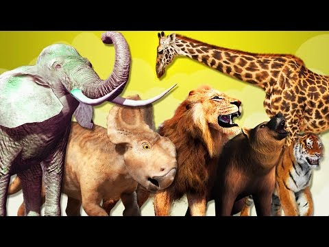Learn Names And Sounds of Wild Animals | Funny Animals Video for Kids | Learn Wild Animals for Kids