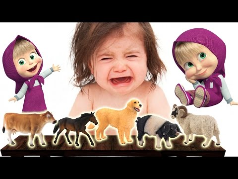 BAD BABY CRYING | Masha and Real Farm Animals – Dog, Pig, Horse, Sheep | Finger Family Song