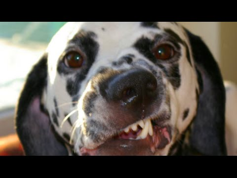 Funny Dogs and Babies Farts Compilation 2016 – Fail Videos