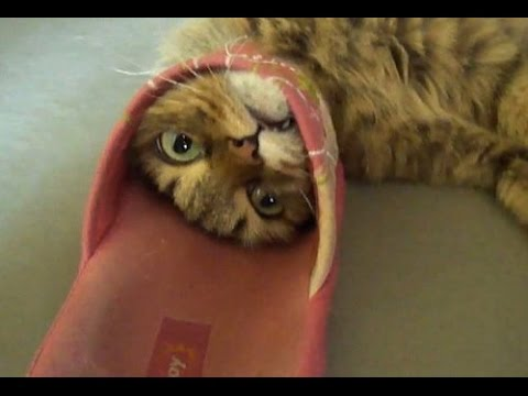 Talented cats – Funny cat, animal Compilation 2017