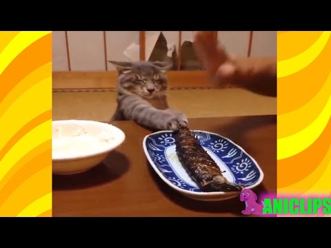 The Funniest and Most Humorous Cat Videos Everrr ✯ Funny Cats Compilation