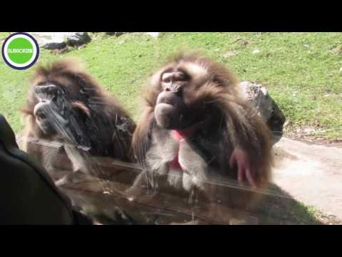 Zoo Animals Attacks Epic Laughs – Trending Video