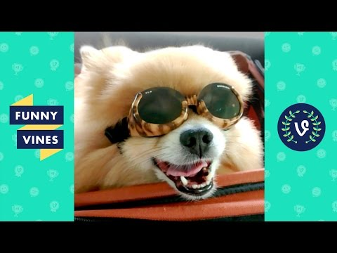 Funny Dogs Compilation 2017 | Funny Vines
